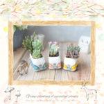 簡単可愛い!魅力的な多肉植物の小さな寄せ植えを作る方法